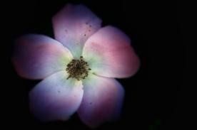 flower 1 retouch